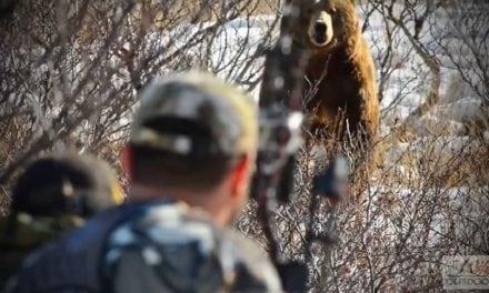 Video: Alaskan Brown Bear Lured in With Predator Call
