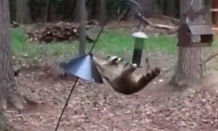 When Cirque Du Soleil Meets Your Bird Feeder