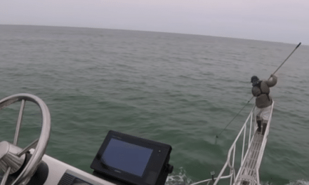 Shark Researcher Turns Into Bait When Great White Leaps Out of the Water