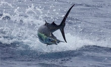 Billfish Conservation Act Implemented