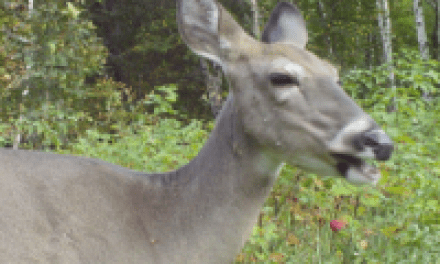 Tips for Hunting the Smartest Deer in the Woods