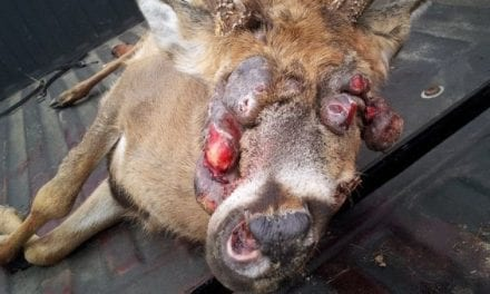 8 Horrible, Nasty Deer You Wouldn't Even Serve Your Enemies for Dinner