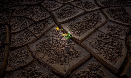 Textures Assignment Winner Sangeeta Dey