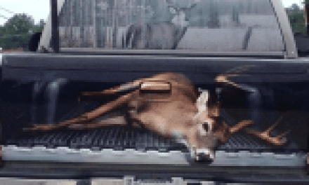 This Giant Buck is the Most Awesome Thing You'll See Today
