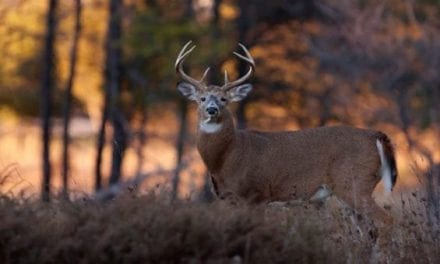 5 Easy Deer Property Doll-Ups You Can Do With a Can of Marking Paint