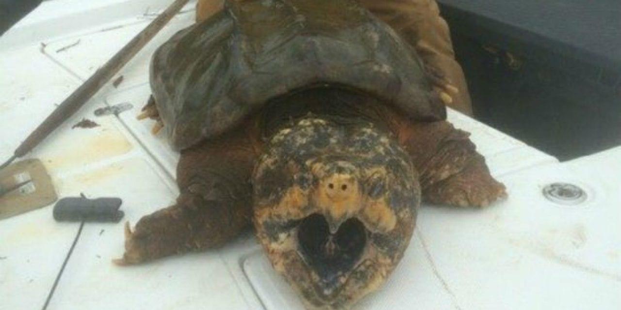 Alabama Man Catches Gigantic Alligator Snapping Turtle