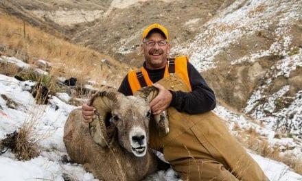 Bighorn sheep hunt is big gift for Auburn man