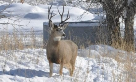 Why Hunting in the Snow is the Best
