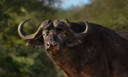 The Big List of Where to Hunt in Africa