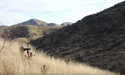 7 Coues Deer Hunting Tips