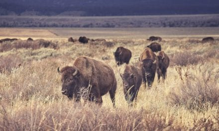 Can Hunters and Conservationists Coexist?