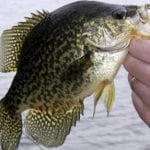 Crazy for Crappie