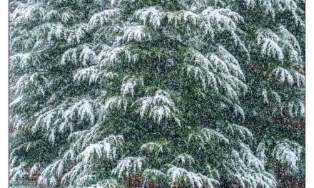 Winter Photos Near You