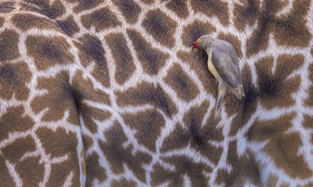 Critter Close-Ups