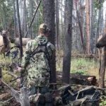Elk Come Within Licking Distance of Bowhunter