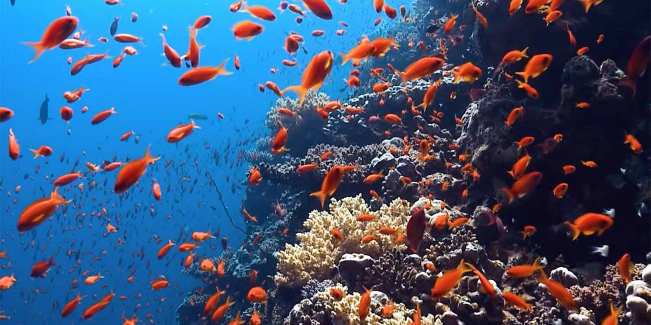 Ocean Conservancy Statement in Support of Gulf States Managing the Private Recreational Fishing
