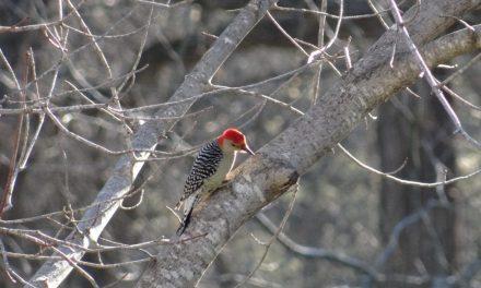 Hunters, Anglers: Become Bird Watchers!