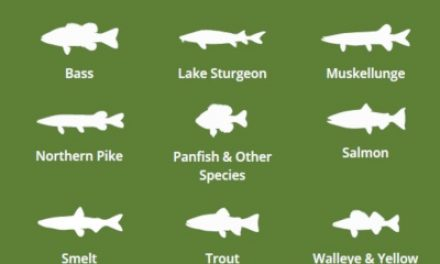 Michigan Fishing Tip: Fishing for the holiday weekend