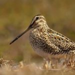Snipe Hunting 101: What You Need to Know to Get Started and Find Success