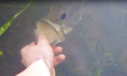 Watch This Kid Catch a Giant Bass With His Bare Hands