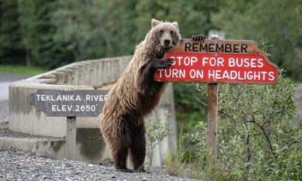 Last Frame: Drive Carefully
