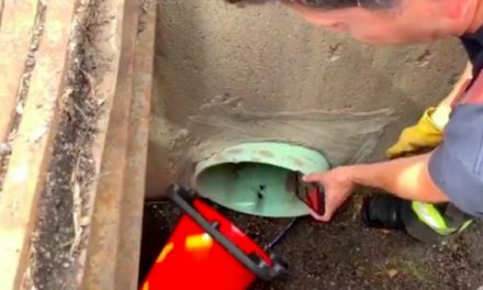 Firefighters Rescue Ducklings Using YouTube Duck Calls