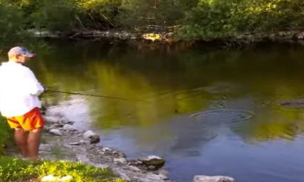 Video: Florida Alligator Goes After Fisherman
