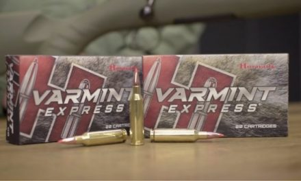What You Need to Know About Hornady Varmint Express Ammo