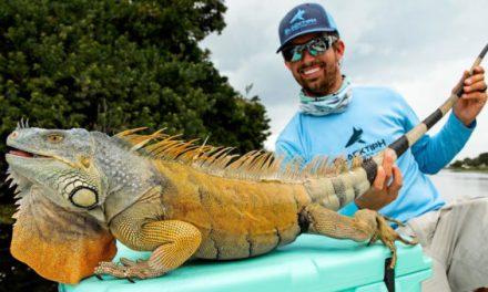 BlacktipH Catches Iguana While Freshwater Fishing in Florida