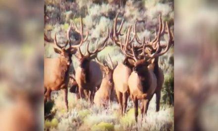 This Scene Will Make Any Elk Hunter's Heart Skip a Beat