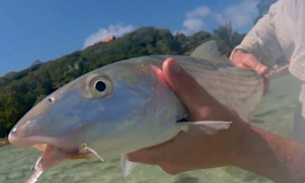 What Species Can You Catch Fishing in the Caribbean?