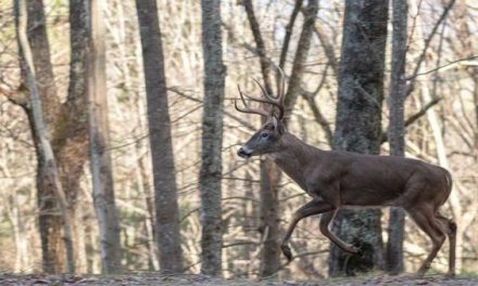 How to Create and Hunt a Deer Funnel (and Lead Them Straight to You)