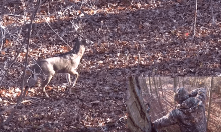 Watch a 17-Point Archery Buck Taken in New York Known as 'The Goat'