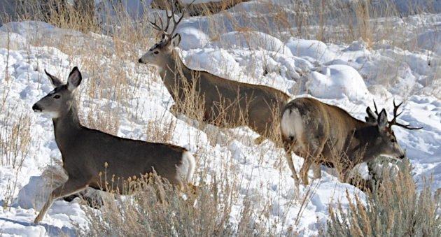 Hunting Season Noises