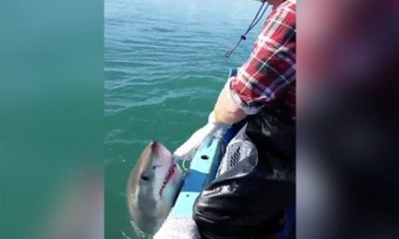 Aussie Has a Tug of War With a Great White Shark, Then Cusses at It When He Loses