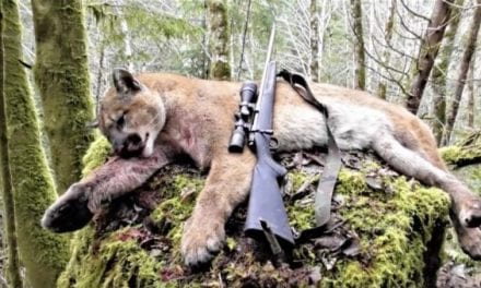 This Oregon Cougar Hunt Ends With a Bang