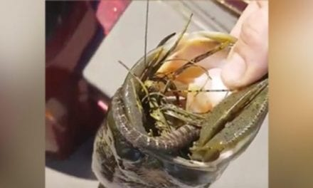 Tourney Angler Manages to Hook a Bass and a Snake