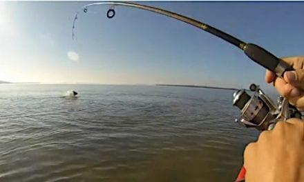 10 Big Fish That Got Away