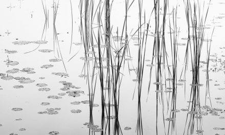 Behind The Shot: Zen Garden