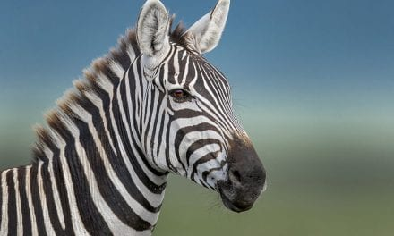Heavenly Wildlife Headshots