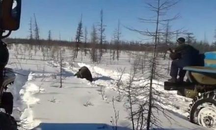 Russian Truckers Heinously Flatten a Brown Bear, Uproar Ensues