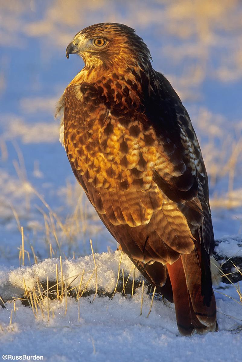 Wildlife in the snow