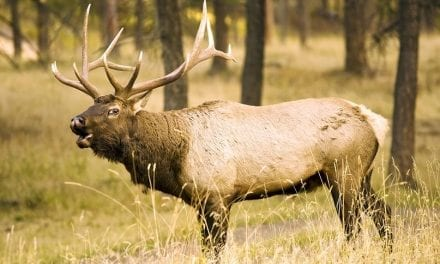 5 States With the Best Over the Counter Elk Hunting