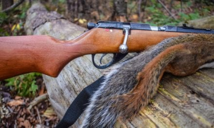 9 Best Rifles for Predator and Varmint Hunting