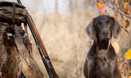 Gun Dog Hall of Fame: The 20 Best Hunting Breeds to Hit the Field