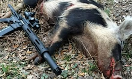 8 Best Options for a Good Hog Hunting Gun