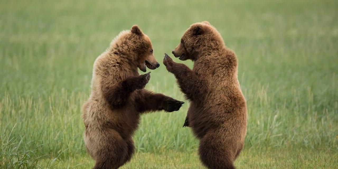 Last Frame: Dancing Bears