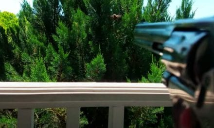 Man Drops Carpenter Bees Out of the Sky With .22 Birdshot