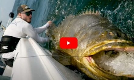 500+ Pound Goliath Grouper Pushes Determined Angler to the Limit