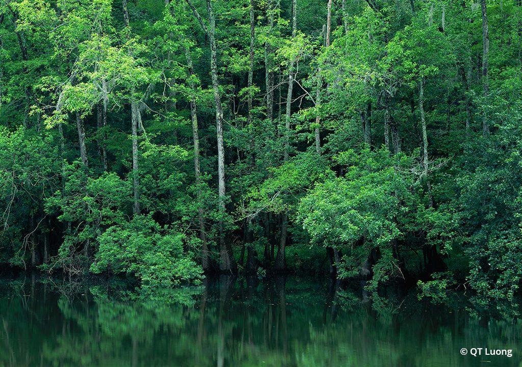 photo taken at Congaree National Park